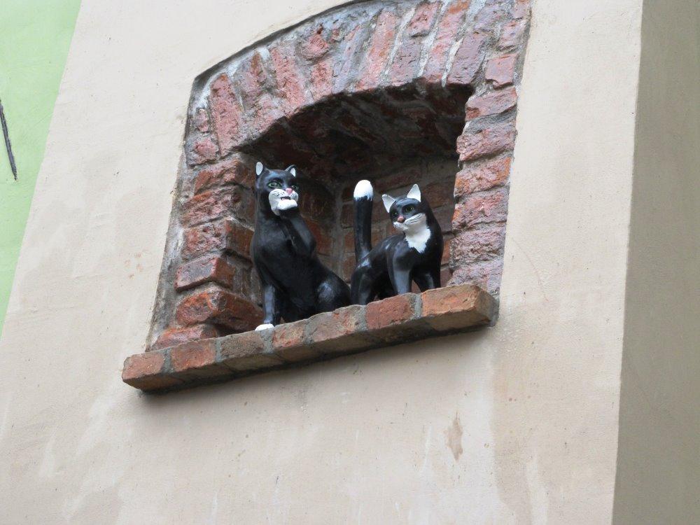 Ilustracja do informacji: Nowa – stara legendach o żarskich kotach