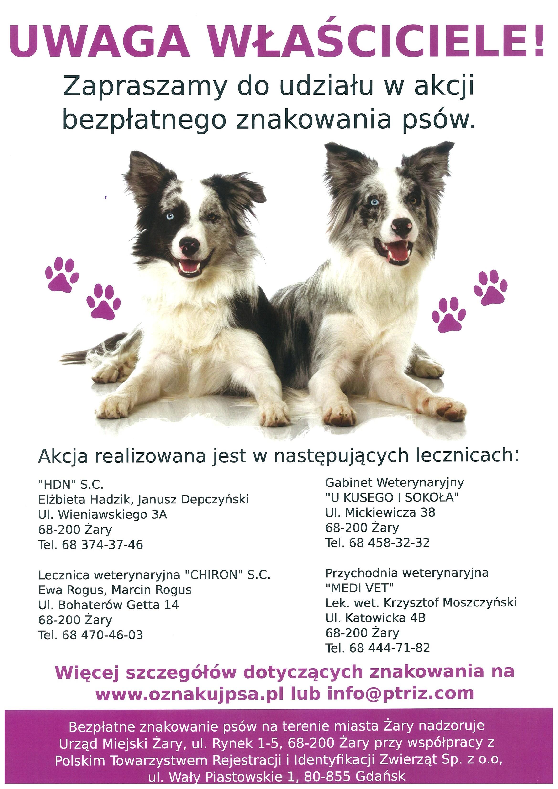 Ilustracja do informacji: Bezpłatne znakowanie psów