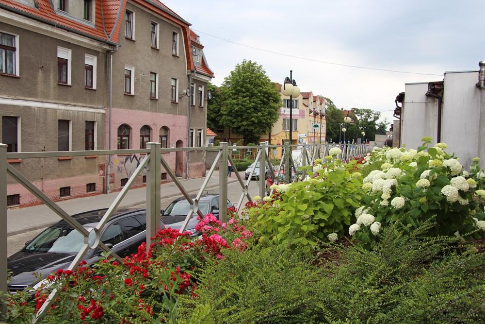 Ilustracja do informacji: Miasto kwitnie…